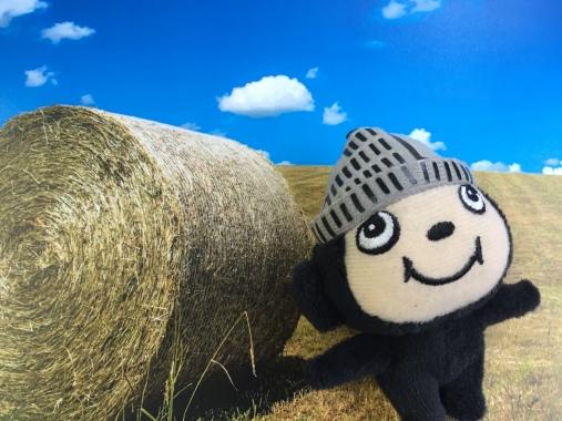 ぶんちゃん牧草ロール