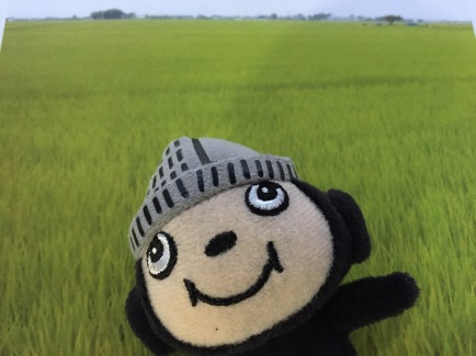 ぶんちゃん田んぼ
