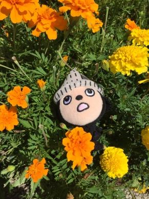 ぶんちゃん花の上